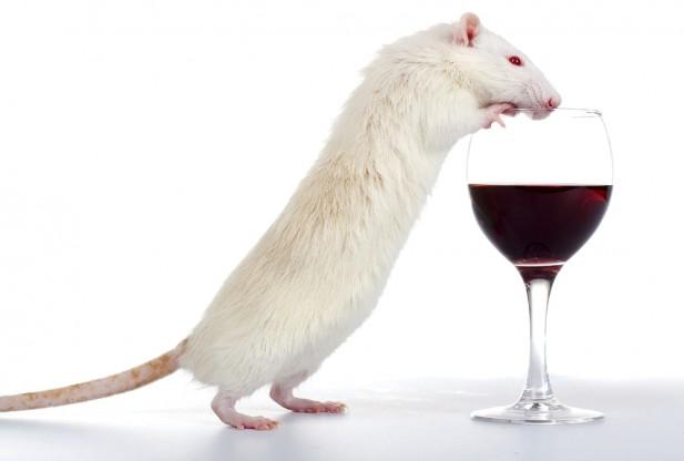 rat_health-013113-001-617x416